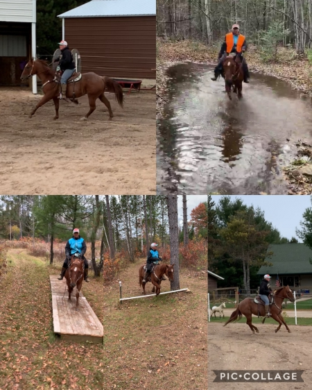 Jm rockin Red Baron , American Quarter Horse Gelding for sale in Wisconsin