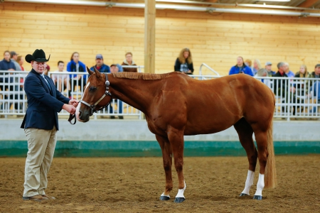 Lopin Slow Zip, American Quarter Horse Gelding for sale in Minnesota