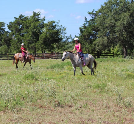 Honey, Quarter Pony Mare for sale in Texas
