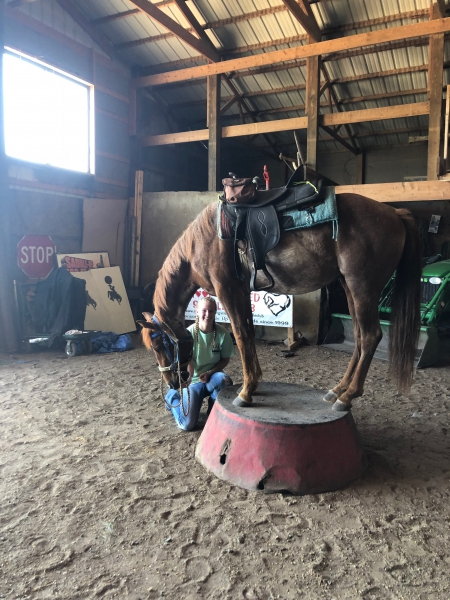 Rango, Quarter Horse Cross Gelding for sale in New Hampshire