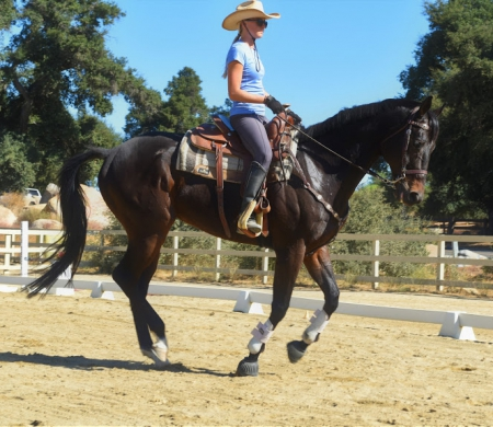 Sheriff Rosco P. Coltrane, Thoroughbred Gelding for sale in California