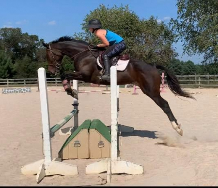 High End Gal , Thoroughbred Mare for sale in Maryland