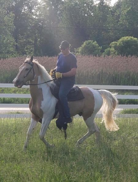 LEMONDROP (Jake), Tennessee Walking Horses Gelding for sale in Ohio