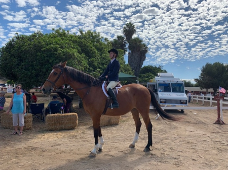 Ticho, Warmbloods (All) Gelding for sale in California