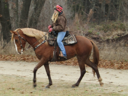 Abby, Tennessee Walking Horses Mare for sale in Michigan