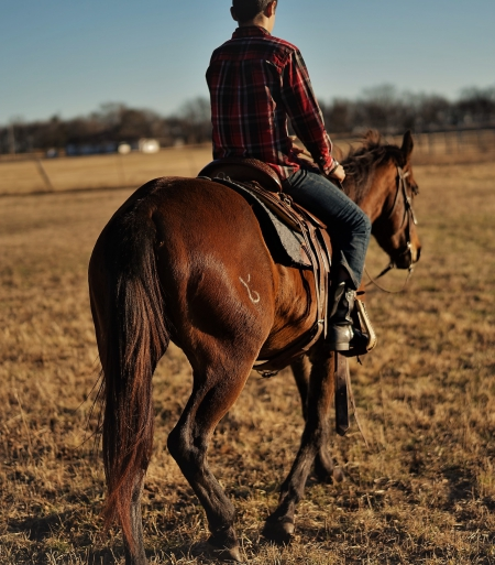 HANK, American Quarter Horse Gelding for sale in Oklahoma