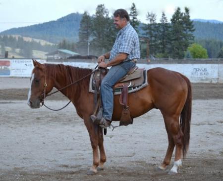 Princeston, American Quarter Horse Gelding for sale in Washington