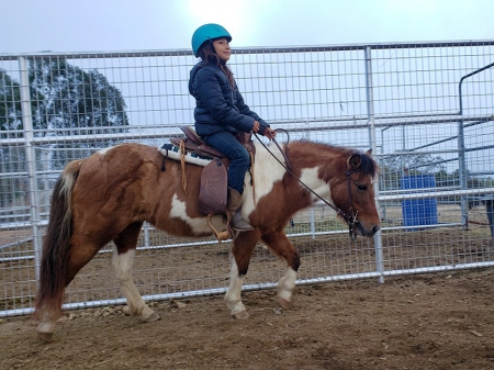 Ginger: Safe, Gentle, Beautiful Babysitter Pony, Ponies (All) Mare for sale in California