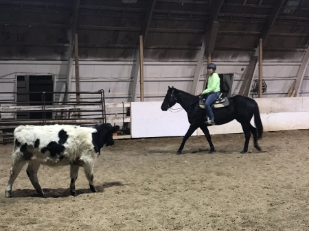 Prince, American Quarter Horse Gelding for sale in Minnesota