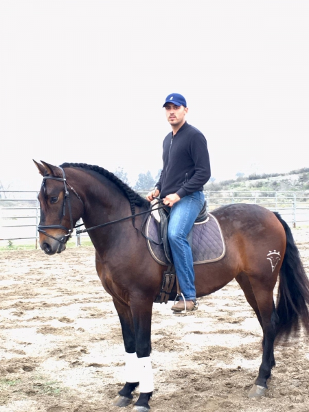 Destino, Andalusian Gelding for sale in California