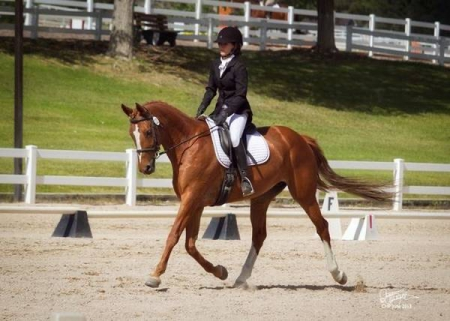 Good As Gold - Tango, Oldenburg Mare for sale in Colorado
