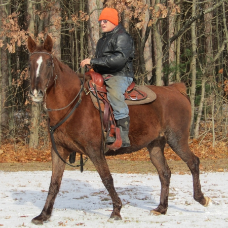 Rose, Tennessee Walking Horses Mare for sale in Michigan