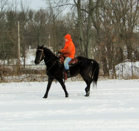 Sammy, Tennessee Walking Horses Gelding for sale in Michigan