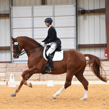 Portfolio, Dutch Warmblood Gelding for sale in Oregon