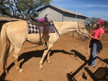 Iron Innovator/Majic, American Quarter Horse Gelding for sale in Texas