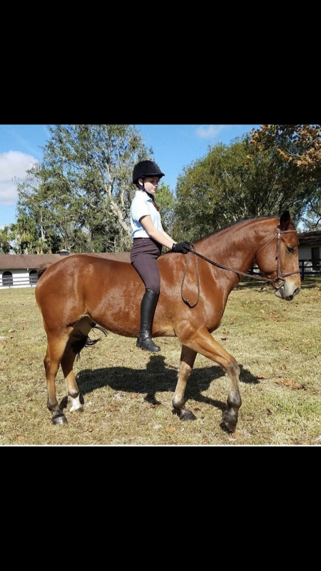 Durango, Quarter Horse Cross Gelding for sale in Florida
