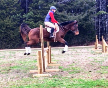 Gracefully Done, Thoroughbred Mare for sale in North Carolina