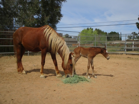 King Jetson, Mustang Colt for sale in California
