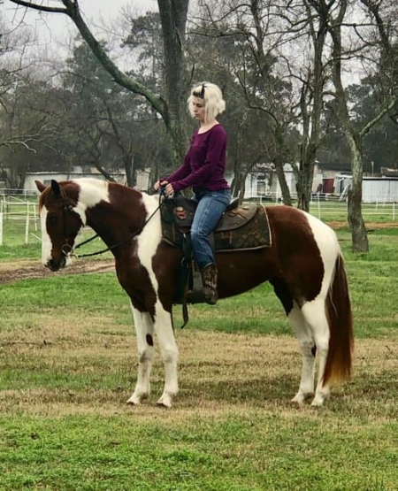 Penny, Spotted Saddle Mare for sale in Texas