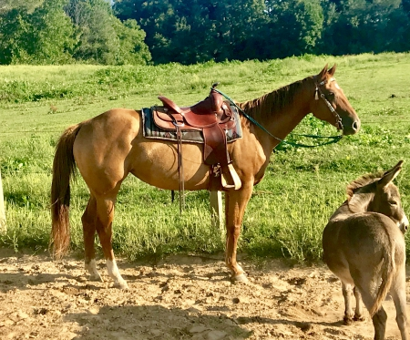Talkn' Real Gems (Macey), American Quarter Horse Mare for sale in Michigan