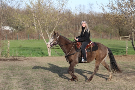 Lasso, Other Gelding for sale in Michigan