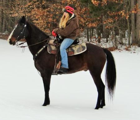 Sunny, Missouri Fox Trotting Horse Gelding for sale in Michigan