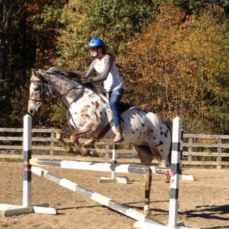 Chili, Appaloosa Gelding for sale in Pennsylvania