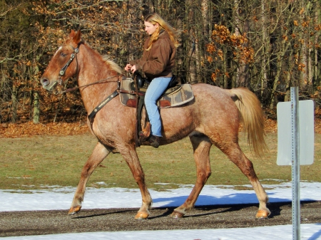 Roman, Tennessee Walking Horses Gelding for sale in Michigan