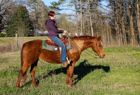 ASPEN, American Quarter Horse Mare for sale in Alabama