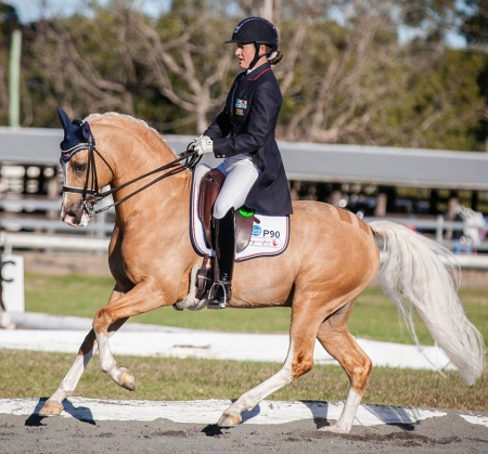 Absolutely Striking Palomino German Pony Gelding, Palomino Gelding for sale in Texas
