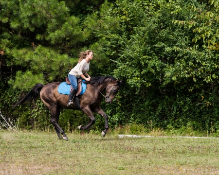 My Golden Touch aka Ammo, Thoroughbred Gelding for sale in Tennessee