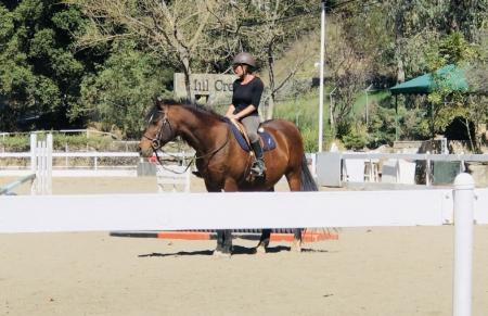 CJ, Arabian Gelding for sale in California
