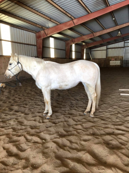 The Satin Mechanic, American Quarter Horse Mare for sale in South Dakota