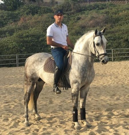 Diamante - Grey Andulusian Stallion, Andalusian Stallion for sale in California