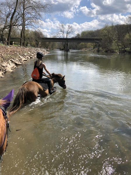 Hershey , Haflinger Mare for sale in Pennsylvania