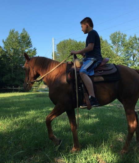 Rich Queenie, Arabian Mare for sale in Mississippi