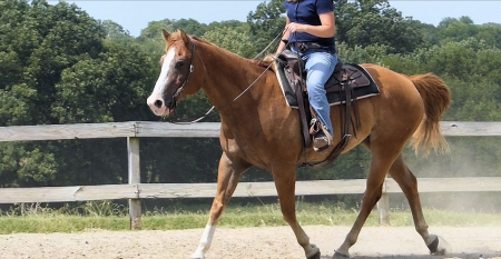 Jerry , American Quarter Horse Gelding for sale in Texas