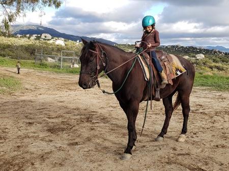Denver, American Quarter Horse Gelding for sale in California