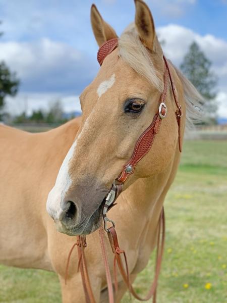 Bill Self, American Quarter Horse Gelding for sale in Oregon