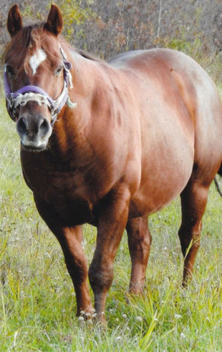 Dudes Blondys Dude, American Quarter Horse Stallion for sale in Utah