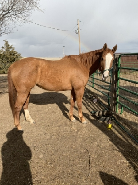 Bonnie or - Registered name *Mary Ratchett, American Paint Horse Association Mare for sale in Colorado