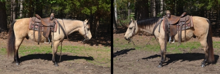 Timber, Ponies Gelding for sale in North Carolina