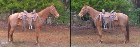 JH BLUE FOR HONEY, American Quarter Horse Mare for sale in North Carolina