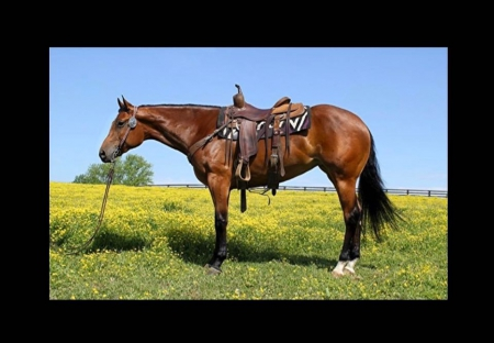 Shesaperfectmachine (Macy), American Quarter Horse Mare for sale in Kentucky