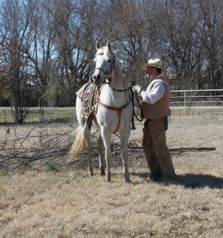 Talitha, Arabian Mare for sale in Oklahoma