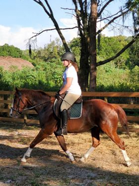 Cody Roys Pep, American Quarter Horse Gelding for sale in Florida