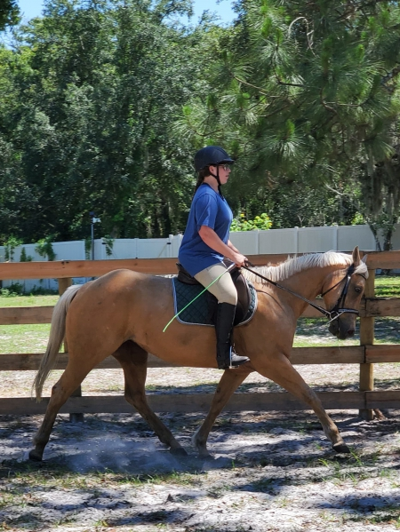 Muddy River Amarillo, American Quarter Horse Mare for sale in Florida