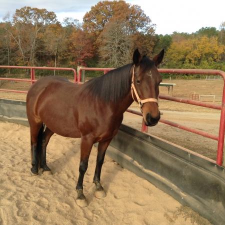 Kizmet, American Quarter Horse Mare for sale in Georgia