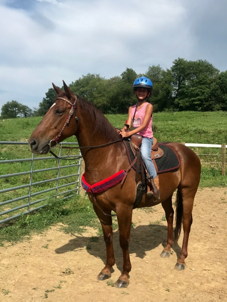 Benie, American Quarter Horse Gelding for sale in Pennsylvania
