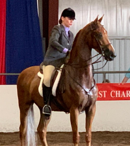 Sharpe's Gold, American Saddlebred Gelding for sale in Missouri